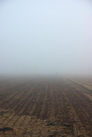 朝霧の田園風景