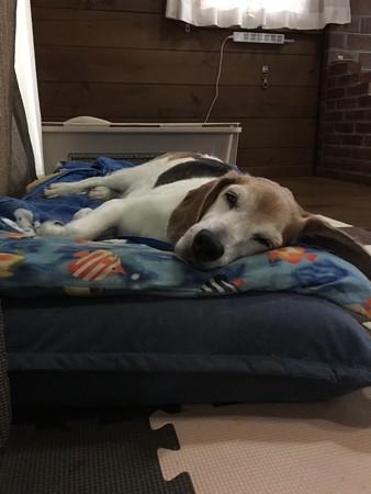 えーっと寝てばっかりのマリンですが、元気ですよ