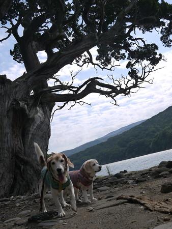 天然記念物ビャクシンの木の前で記念撮影(立派だねー)勝手に枝打ちすることが出来ず県の許可が必要なんだってさ!