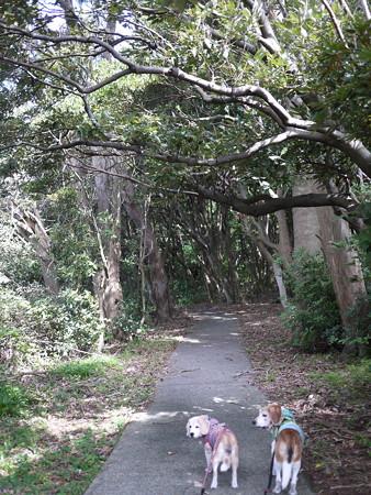 さーて、伊豆の七不思議の「神池」の方に歩いていこうか!