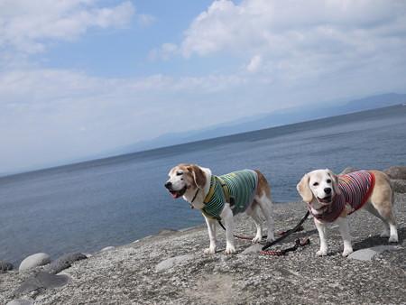 駿河湾どーん!富士山がみえなーい!