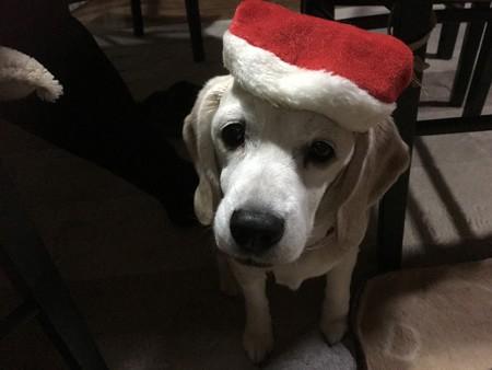 みなちゃまは、素敵なクリスマスを過ごしてくだちゃいね