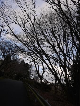 空と木々が美しい