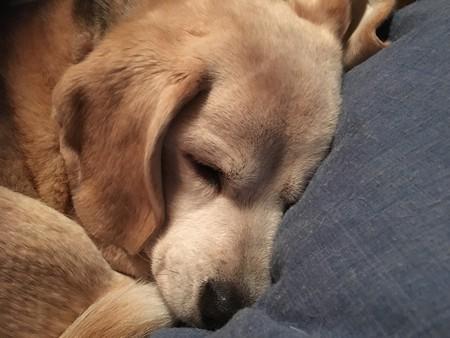 愛しい娘の寝顔