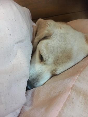 うみちゃんの可愛い寝顔