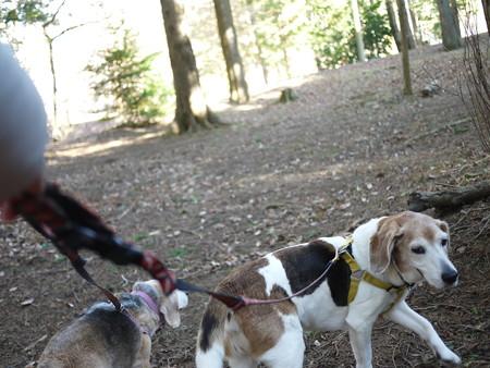 まずは森の公園に来ましたよ!