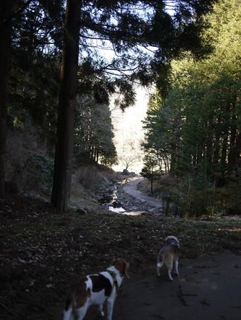久しぶりの森の公園楽しかったね