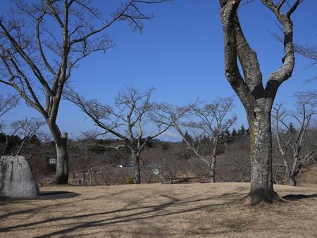 富士山も見れましたね!(桜の間から撮影してみたーい!)