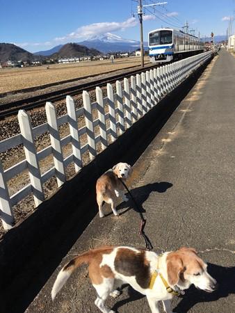 うぁーーー!急げーと焦って撮ったマリうみと富士山と伊豆箱根鉄道