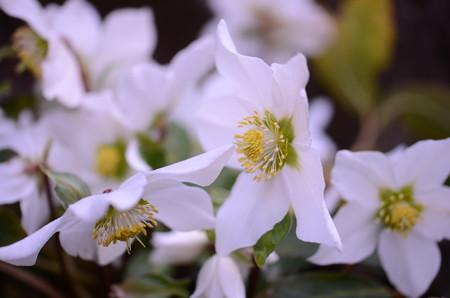えっと、、、白いお花とぉおおろっと(知らんぷり!)
