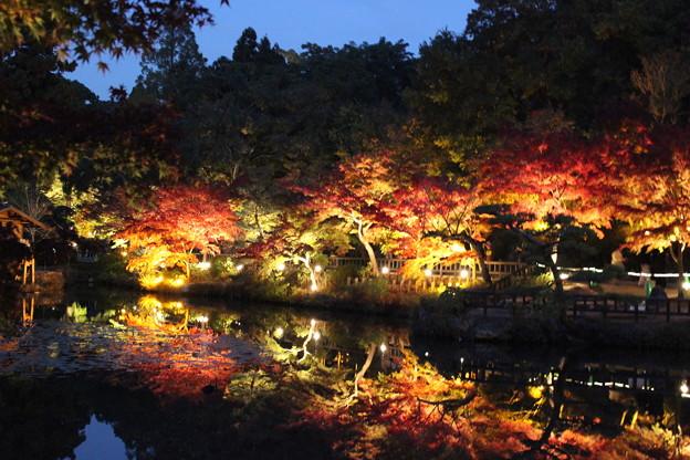 Photos: 東山植物園ライトアップ1