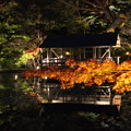 写真: 東山植物園ライトアップ2