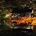 東山植物園ライトアップ2
