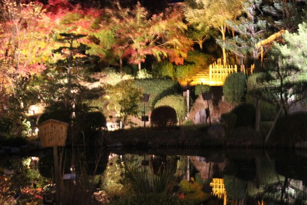 写真: 東山植物園ライトアップ3