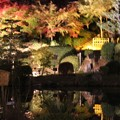 東山植物園ライトアップ3