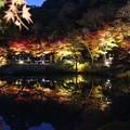 写真: 東山植物園ライトアップ4