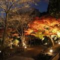 写真: 東山植物園ライトアップ5