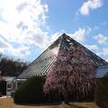 Photos: 名古屋農業センター3