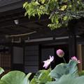 Photos: 蓮花院