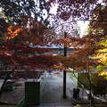 写真: 比叡山延暦寺の紅葉3