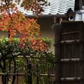 写真: 天授庵の紅葉
