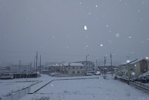 雪の朝二日目