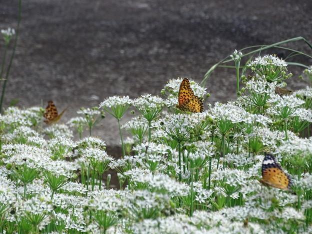 写真: 韮畑