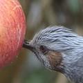 写真: 花よりリンゴ