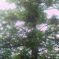 木の上の猫さん今日も動かず。 声を掛けても目を開けるだけになってしまった。 救助が必要だろうか (*_*)?