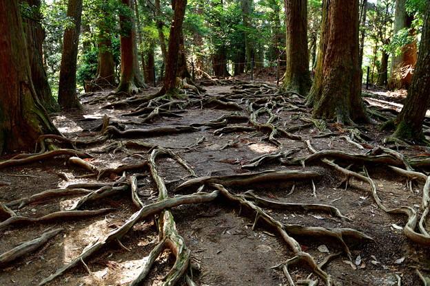 2016_1112_133837 木の根道