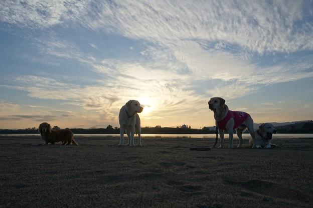 Photos: 夕日と一緒