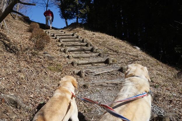 お山の散歩