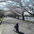 写真: 散歩コースo(^-^)o