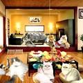 写真: 楽しい猫友会