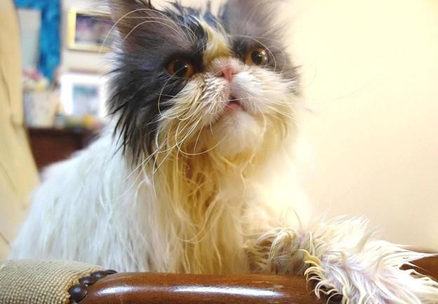 深呼吸する猫