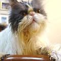 写真: 深呼吸をする猫