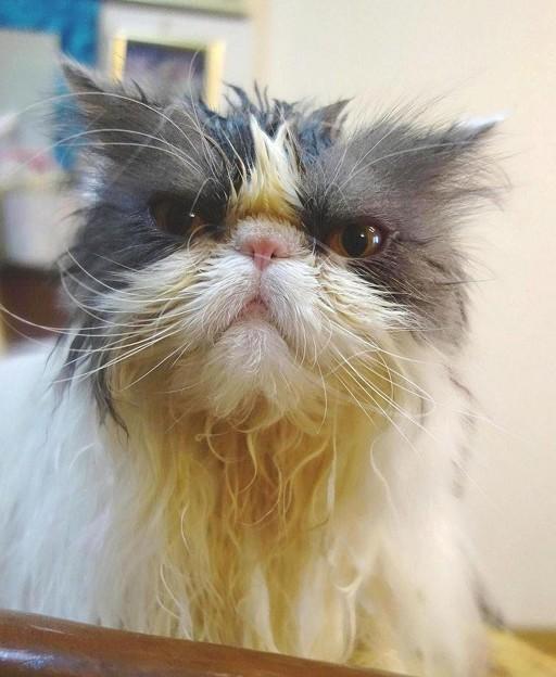 溜息をつく猫