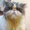 写真: 溜息をつく猫