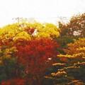 写真: 窓の外の紅葉