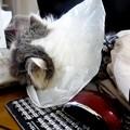 写真: PCを占拠する仔(2)