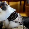 写真: 女装しちゃったくうちゃん