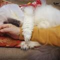 写真: しがみついて眠る仔