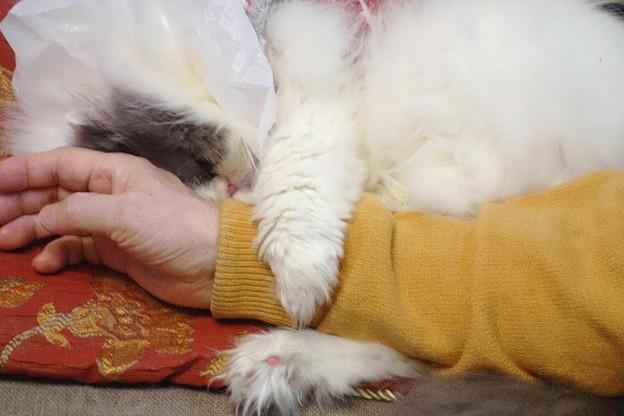 写真: しがみついて眠る仔 (3)