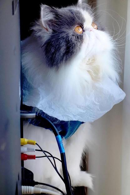 写真: 見上げる猫