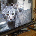 世界ねこ 明神池の猫