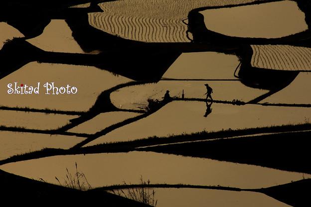 写真: 田植えの風景