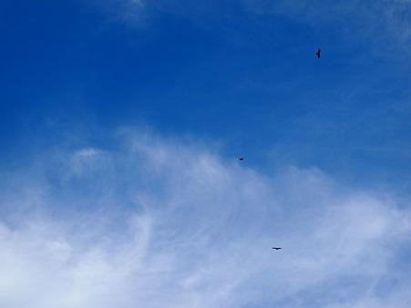 飛べ飛べトンビ