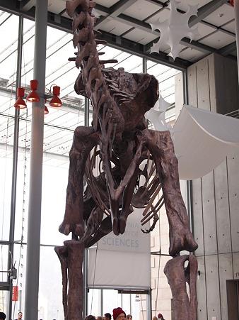 ディらのサウルスのお尻