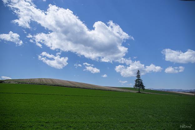 写真: 丘にひとり