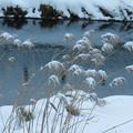 写真: 雪帽子